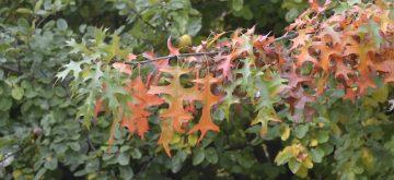 Verwijderen van herfstbladeren weer gestart
